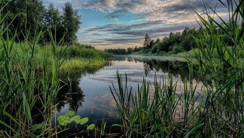 Місячний календар риболовлі на Червень 2021 року.