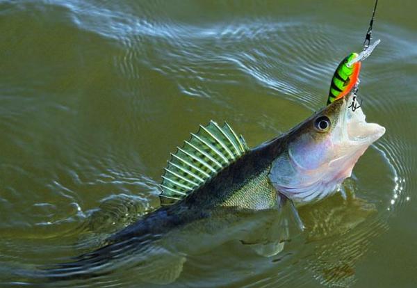 Місячний календар риболовлі на Липень 2021 року.