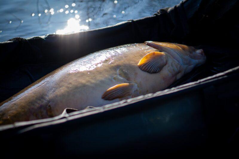 Місячний календар риболовлі на Вересень 2021 року.
